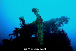Top side of ship wreck in Bega Lagoon, Fiji.  Nikonos V 